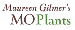 Maureen Gilmer's Mo Plants